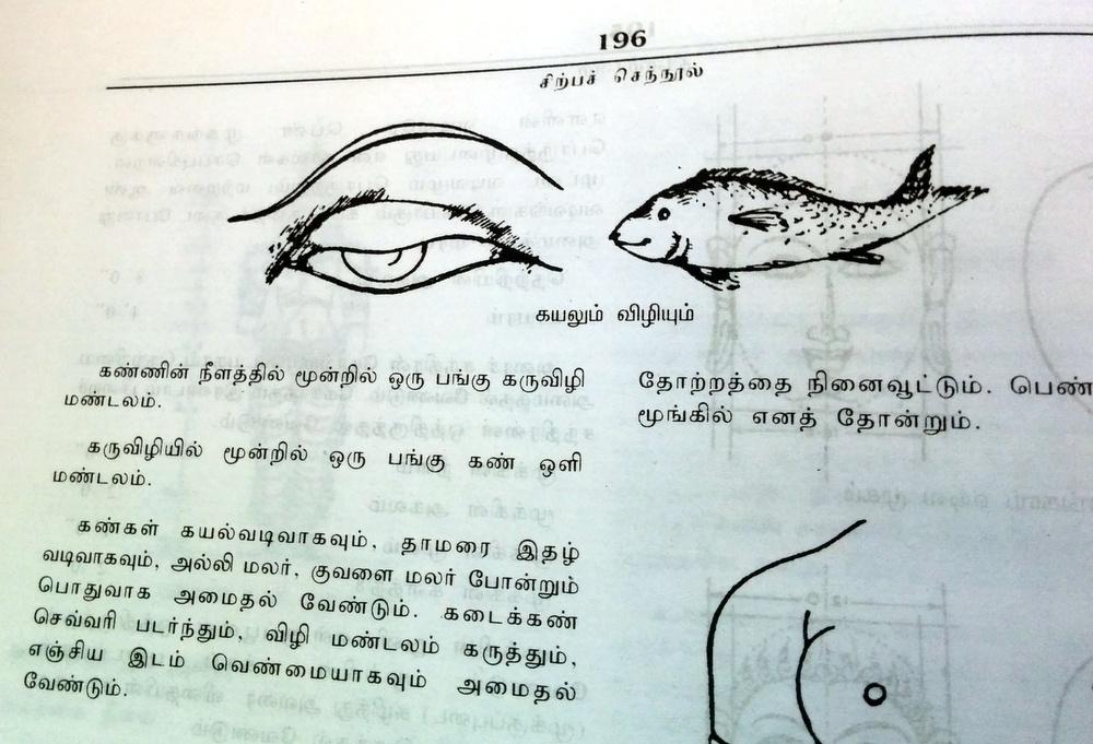So an eye is shaped like a fish?